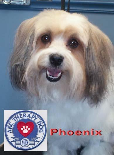 Ch. Castlehill's Crimson Phoenix CGC TDI RN TWT ThD Phoenix finished her Championship in July. She has now received from the AKC their new Therapy Dog Title ThD.