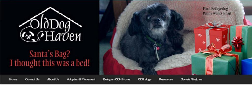 Senior Pets - All They Need is Love FEATURED SENIOR RESCUE OLD DOG HAVEN IN LAKE STEVENS, WASHINGTON 621 SR9 NE PMB A-4, Lake