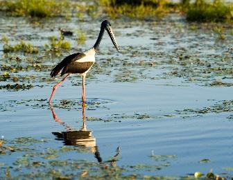 1 2 TRAFFIC Post Sri Lanka to host the next CITES CoP18 May 2019 Wim van Passel / WWF Black-necked Stork The next meeting of the Conference of the Parties (CoP18) to the Convention on International