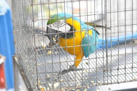 TRAFFIC Post http://zeenews.india.com/news/sci-tech/bsf-seizes-rare-parrots-in-bengal_1566474.html http://sb.bsf.gov.in/pressrelease/201701/003-2017.pdf http://www.supernepal.