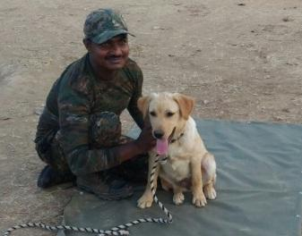 1 2 3 4 5 6 7 TRAFFIC Post TRAFFIC's Super Sniffer Squad in India crosses half century mark; 13 more join the brigade and 12 new dog sqauds begin their training hirteen wildlife sniffer dog squads