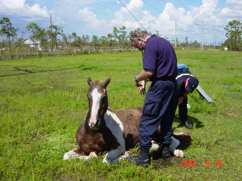 Large Animal Disaster Animal Relief Team assist with large animal rescue and