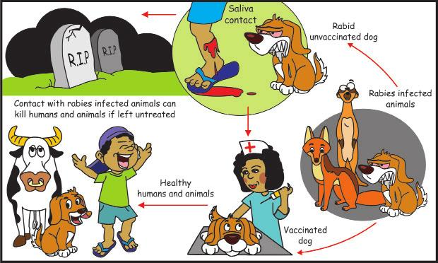 Rabies affects humans and other mammals but is most common in carnivores.