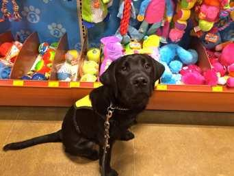 My big day at Petsmart s grand opening! Now, do you think that going to Petsmart is very exciting?