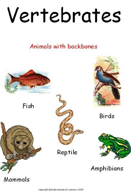 Vertebrate and Invertebrate Animals Compare the