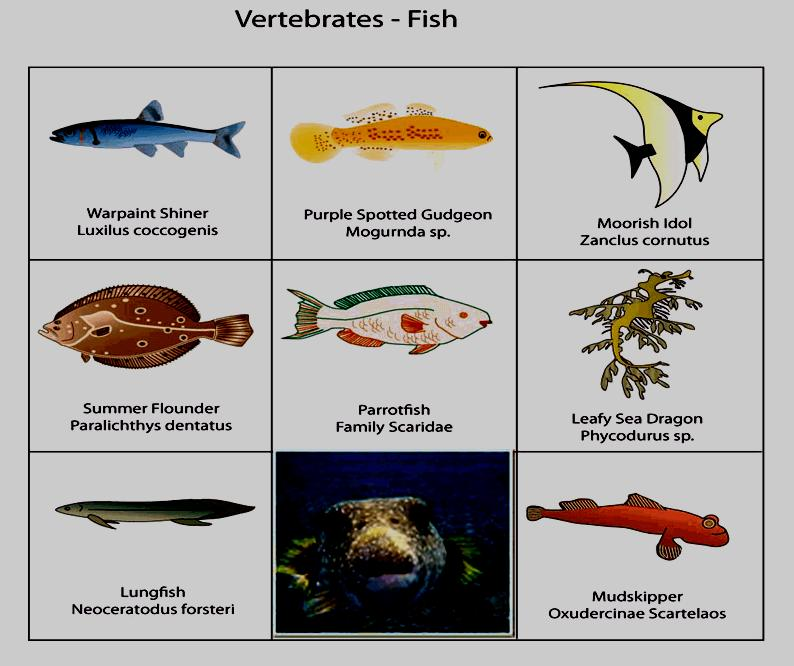 Examples of vertebrates include: Fish cold-blooded (ectothermic) oxygen
