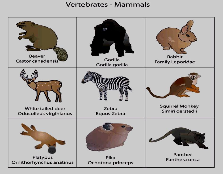 Mammals warm-blooded (endothermic) breathe with lungs most have