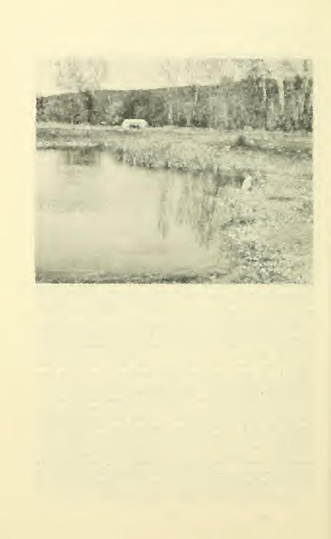 ' 110 GREAT BASIN NATURALIST Vol. 31, No. 2 ^iffj ' - Fig. 1. Pond used for breeding by the boreal toad 8 miles southeast of Hamilton, Ravalli Co., Mont.