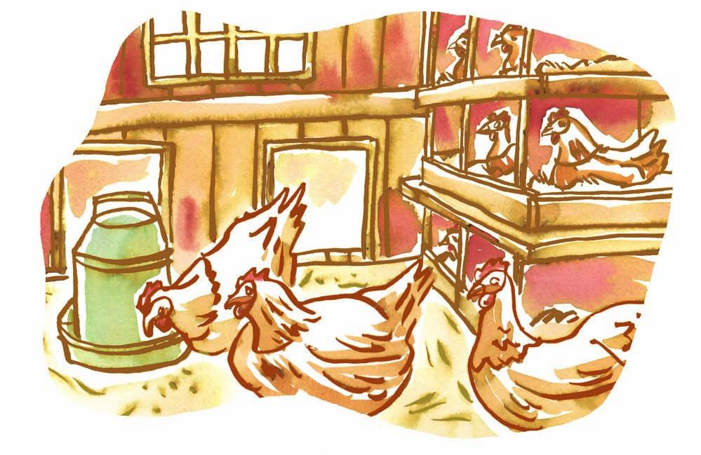 Ethics, Religious Culture and Dialogue IN THE CHICKEN COOP The following story is about a farmer, his hens and his goat.