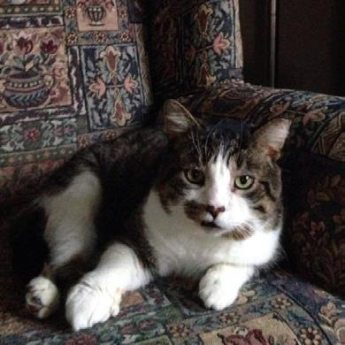 cat tales the newsletter of the Feline Friends Network july/august 2015 It took patience and love... by Joanne Moeser 1418 spays/ neuters Catapawlooza 2015! It s coming up soon!