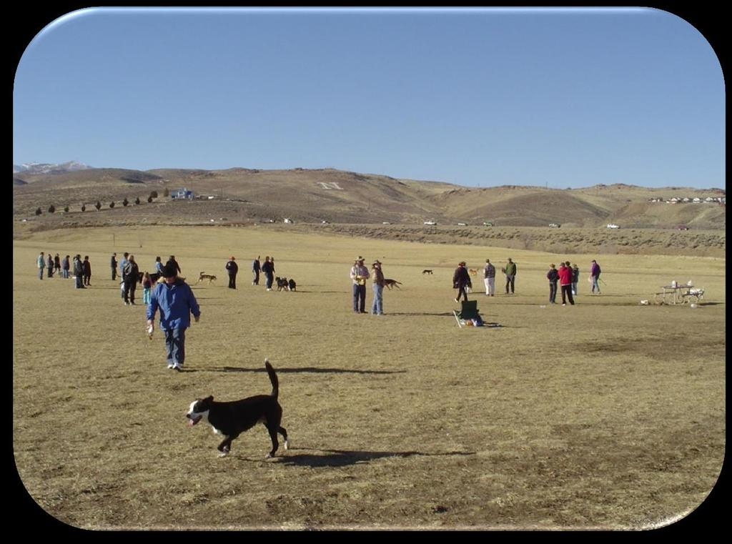 In Washoe County and the Cities of Reno and Sparks, also known as the Truckee Meadows, there are four areas designated as dog parks.