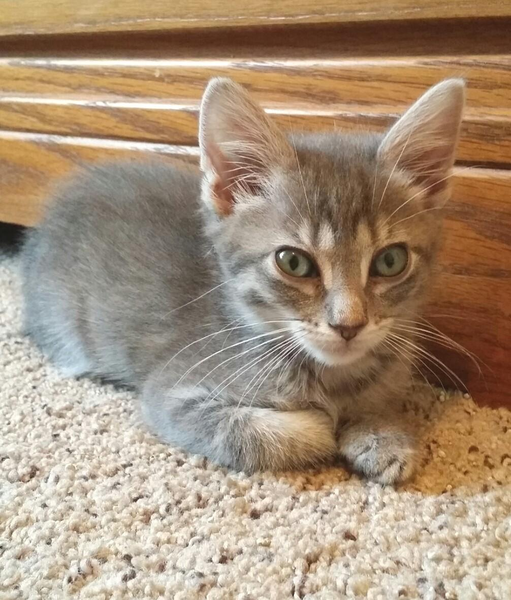 My adoption fee is $90 Please contact Jeylinne at (913)202-3809 for more information about me! Cassie, female, DMH Cassie and her siblings were surrendered when her family moved to Omaha.