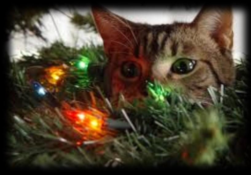 Behavioral News! How to keep your cat away from the Christmas tree Jey E, MSW, ACABC Yes, it s Christmas time. That time of the year many of us adore!