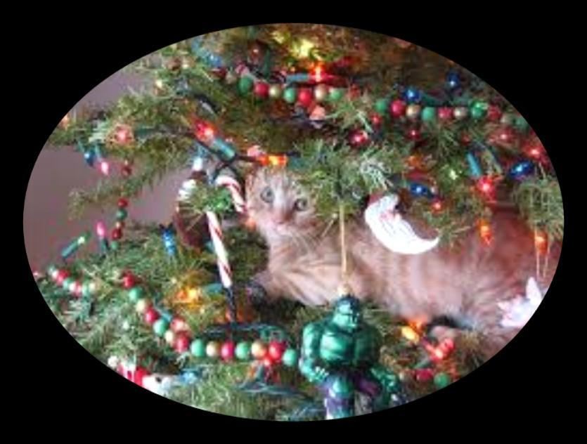 If your cat decides to jump in the tree and the tree falls all those glass ornaments will be destroy in a second, and could lead to injuries.