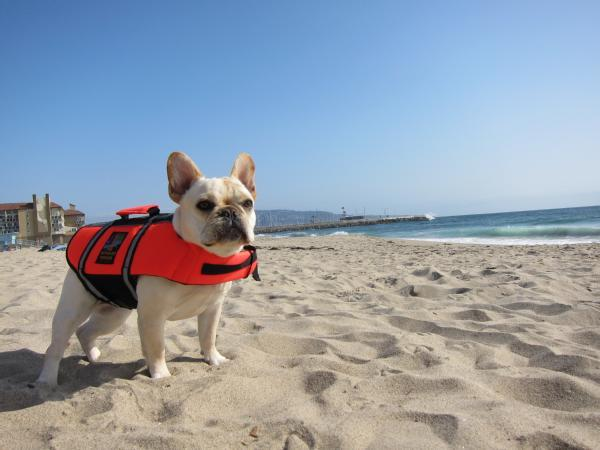 It Pays to Be Prepared! Betty the Prepared Dog Betty lives on the CA coast.