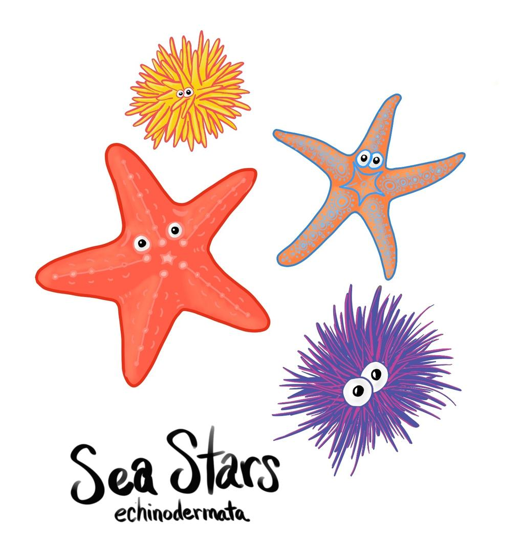 Sea Stars (Phylum Echinodermata), or echinoderms, include sea cucumbers, sand dollars, sea stars and sea urchins. They all live in the sea.
