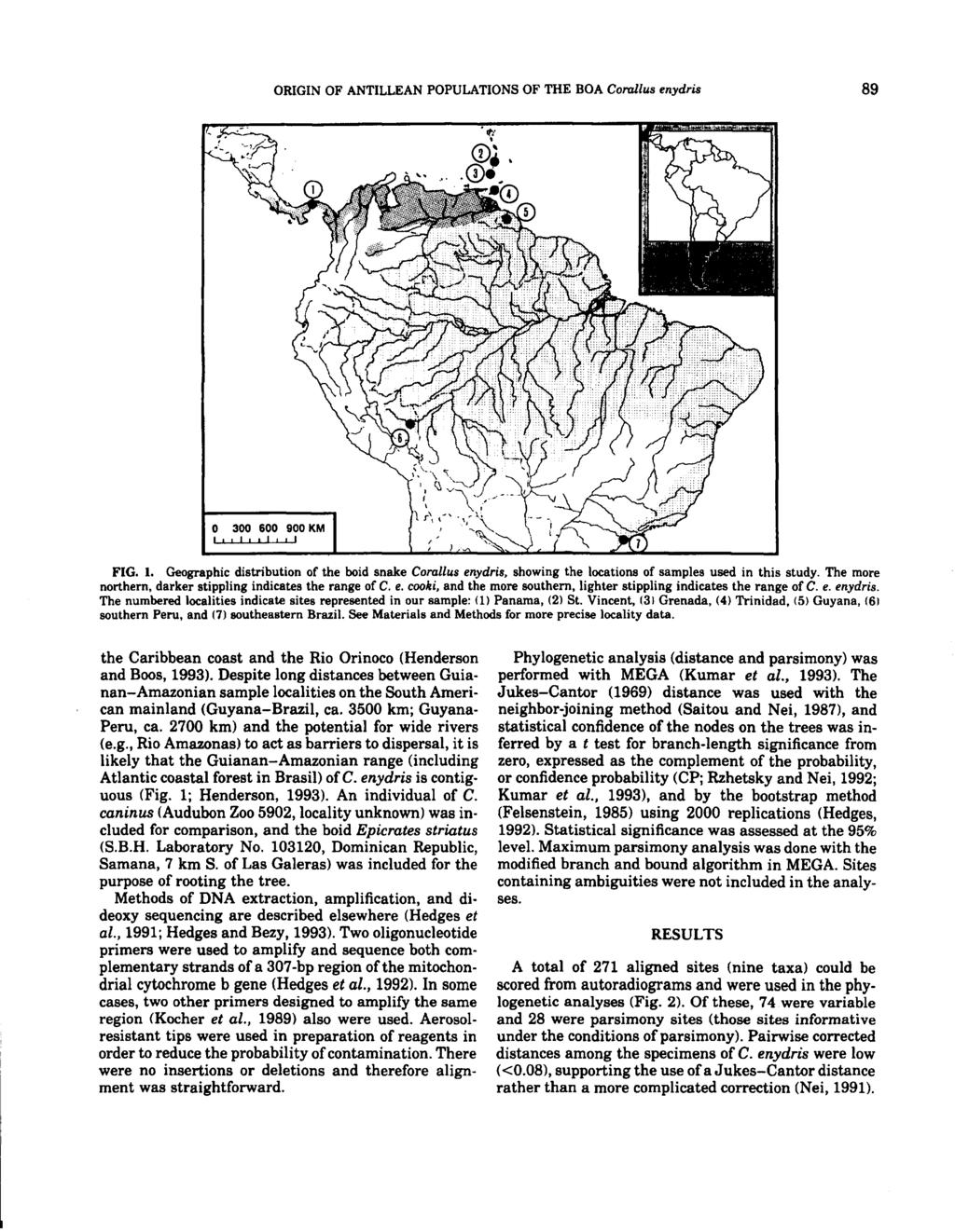 ORIGIN OF ANTILLEAN POPULATIONS OF THE BOA Corallus enydris 89 o 300 600 900 KM 1'1 1,1 I I I I FIG. 1. Geographic distribution of the boid snake Corallus enydris, showing the locations of samples used in this study.