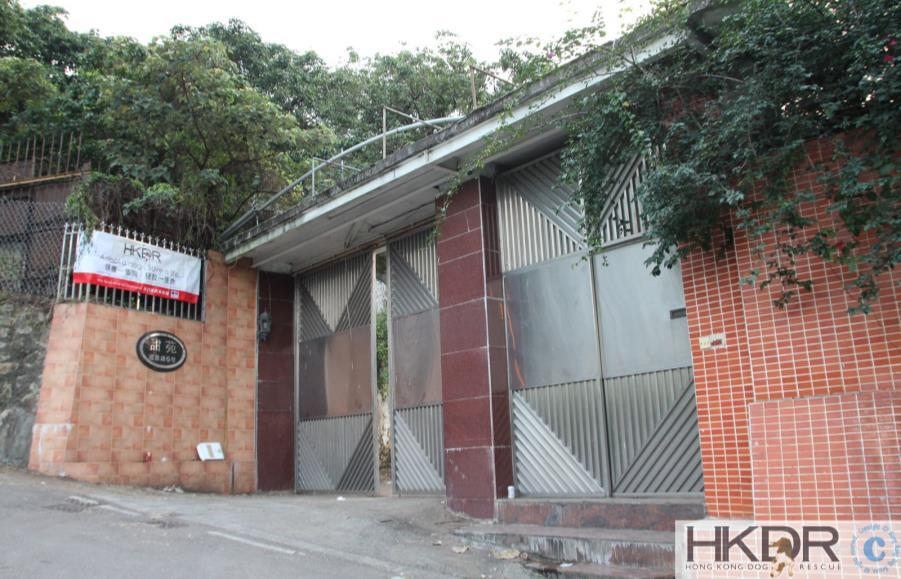 Tai Po Main Homing Centre For medium to large dogs 6 Shek