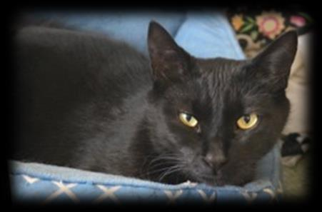 in 2014 Pretty Girl Age: 4 Entered Shelter in 2014 Shadow Age: 4 Entered Shelter in 2014 Smokey Age: 17
