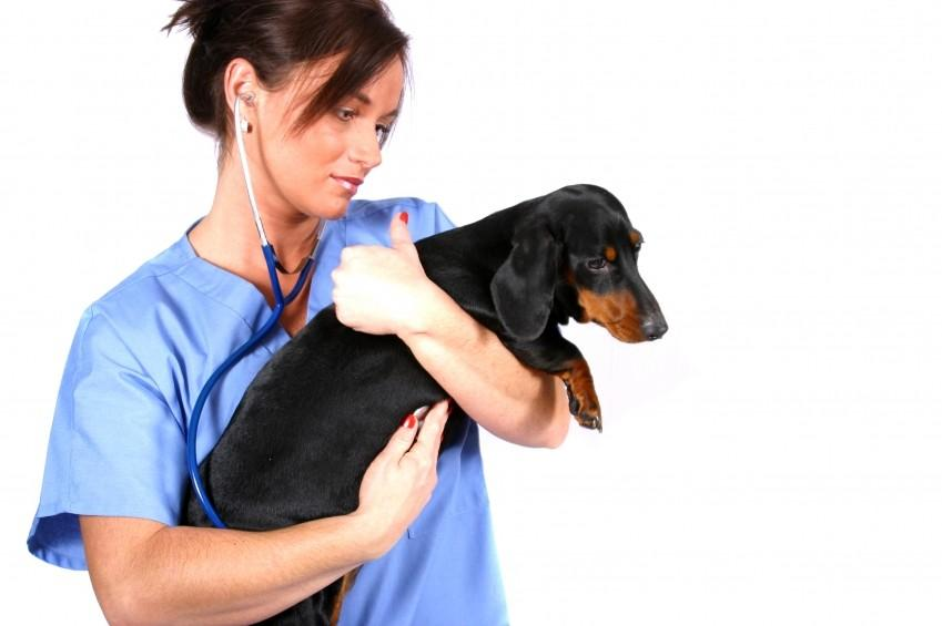 Canine Vaccinations Are Essential Active immunisation is the introduction into the body of microorganisms for the purpose of stimulating the body s defense mechanism.