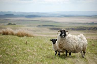 Role of livestock - Sheep - Upland sheep feed 80% of all larvae, >95% all N and A - No systemic infection in sheep - Studies in Scotland confirm co-feeding transmission - Cattle - N:A 9cms;