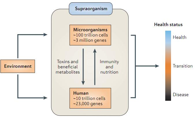 The current research status Nature Reviews Microbiology, 2013, Gut microbiota and diseases Bacterial infections Obesity Colorectal cancer Type-2 diabetes Immunity diseases The human gut microbiota
