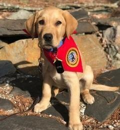 View this email in your browser. Click here. January 2018 VMF Newsletter VMF Welcomes Two New Service Dogs in Training (SDiT)!