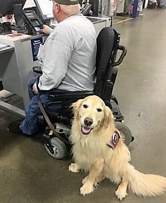 Would you like to have a VMF dog named for a veteran? Update on service dog Dutch Donor updates Attention VMF volunteers How do VMF service dogs change lives?