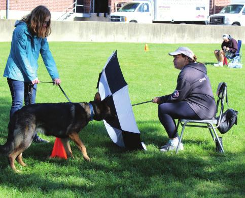 September 22, 2018. It was sunny and cool, the perfect weather for our four-legged entrants, volunteers, and Jim York, the GSDCA evaluator.