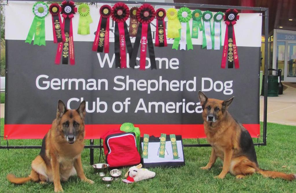 ... A Look at GSDCA Nationals 2018 By Pat Behles It is the event of the year no matter if you have German or American lines, working or show lines, conformation or performance dogs and don t forget