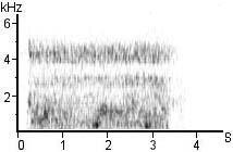 27 was observed at night in the wild to assume HOTA posture for about nine seconds, as its body briefly vibrated suggesting infrasound production.