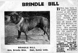 EARLY STAFFORDS FROM THE JFG ALBUMS Brindle Bill, below, was a