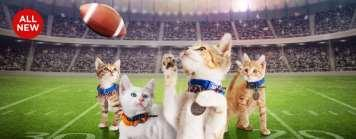 February Happenings Join us this Saturday, February 3 rd for our version of Kitten Bowl V. The action starts when we open at 12 noon.