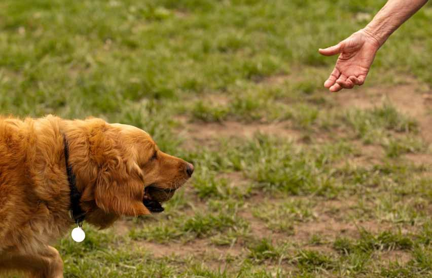 The IndyHumane Dog Park provided playtime for 164 dogs in 2009 and 154 in 2010.