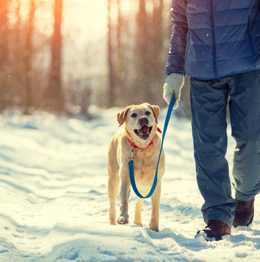 Remember to come to the dog-friendly trailhead prepared with all of the supplies you ll need to keep your pup warm and safe dog booties, a sweater or jacket, paw wax and a bandana so they can be
