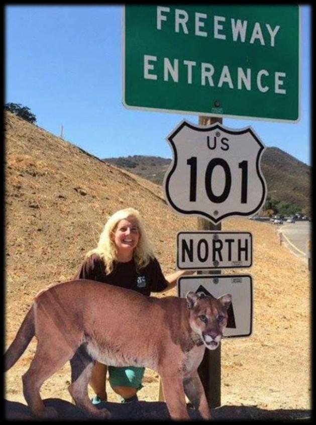 Beth Pratt Bergstrom, who is leading up the cause to build a wildlife crossing over the 101 Freeway in Calabasas!