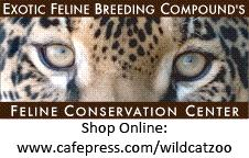 Barney, our Black-footed cat (Felis nigripes) born at EFBC-FCC in June 2015, showed off his hunting skills