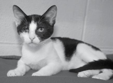 A SPECIAL-NEEDS KITTEN NAMED HALO Halo was a beautiful 4-month old female kitten who made her debut at the HSOV on August 25, 2011 after she was found on Glendale Road in Marietta, Ohio.