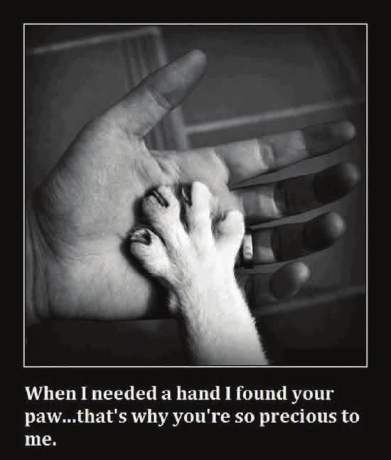The saying at the bottom said When I needed a hand I found your paw that s why you re so precious to me.