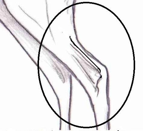 42 Prominent groove, correct Metatarsal dry and without spurs Vaccine Correct Cagnolo The leg ought not to be short and it has to highlight the leg groove.