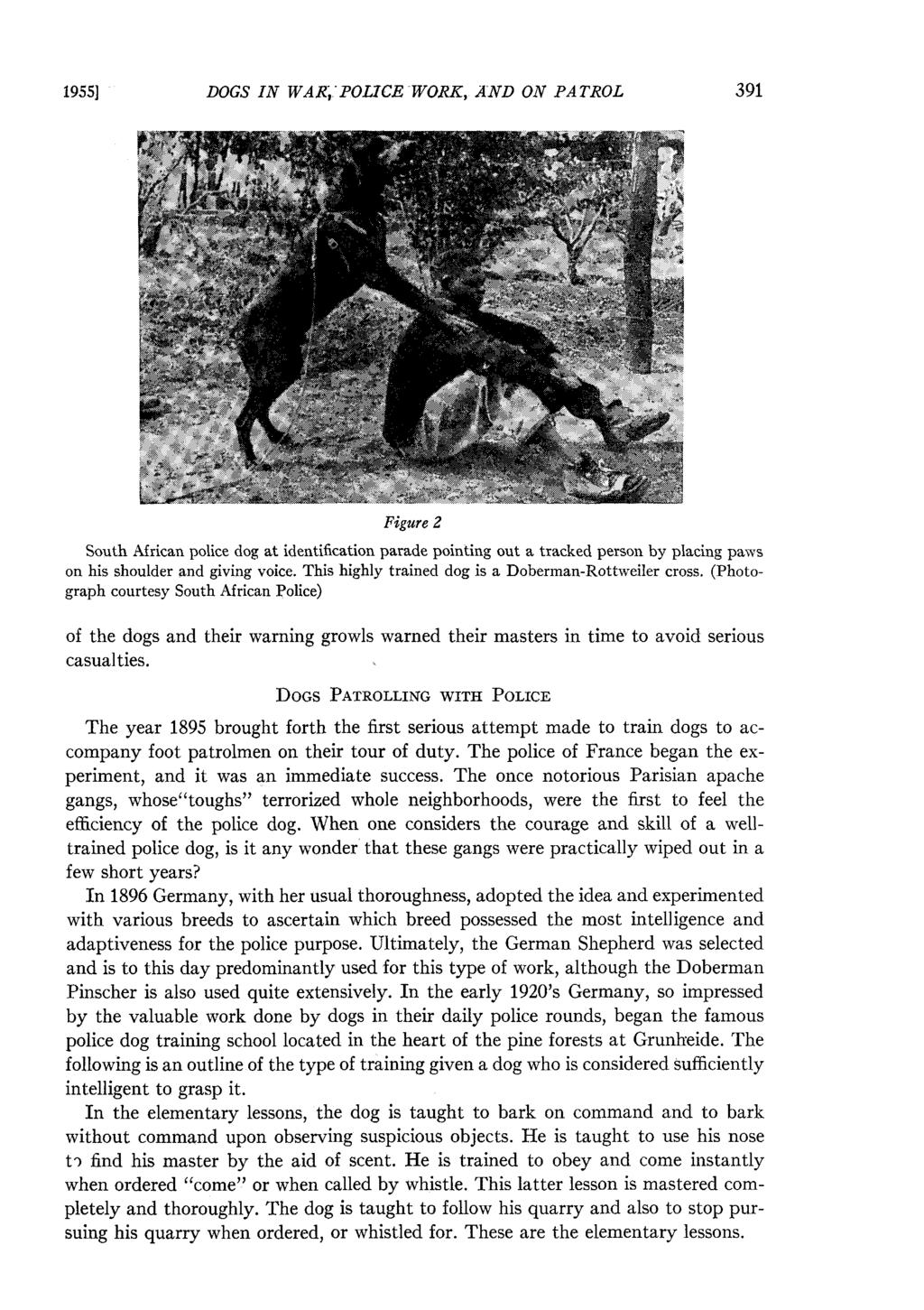 Dogs In War Police Work And On Patrol Pdf Dogmaster Trainers By Products Electric Fence Fencing 1955 Figure 2 South