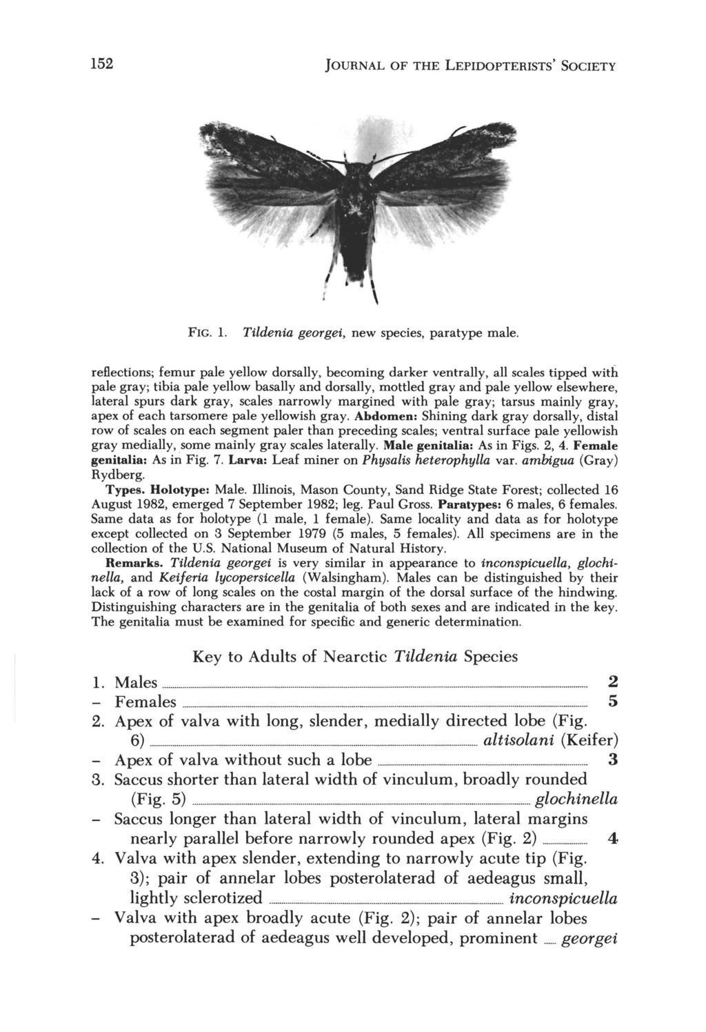 152 JOURNAL OF THE LEPIDOPTERISTS' SOCIETY FIG. 1. Tildenia georgei, new species, para type male.