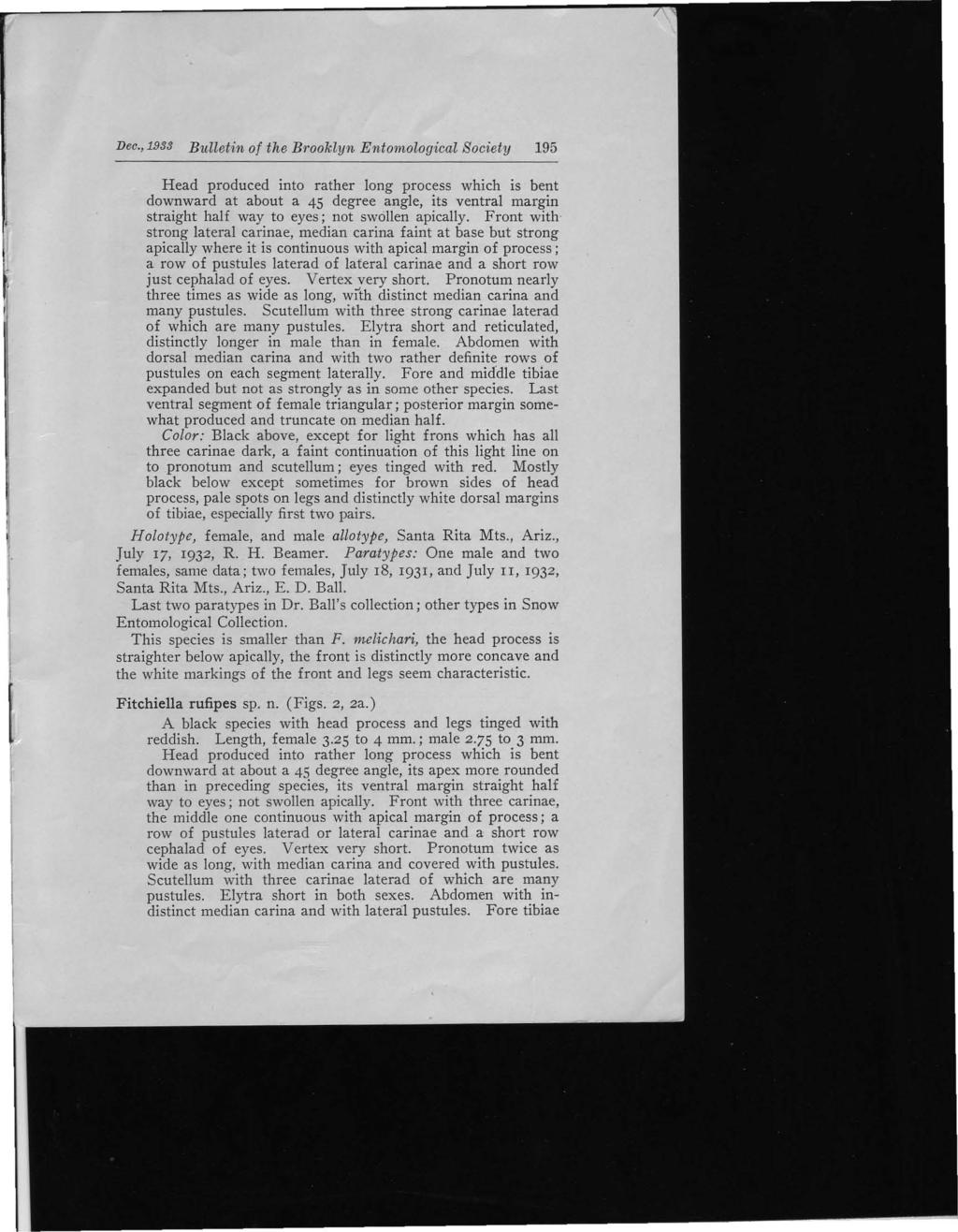 Dec., 1933 Bulletin of the Brooklyn Entomological Society 195 Head produced into rather long process which is bent downward at about a 45 degree angle, its ventral margin straight half way to eyes;